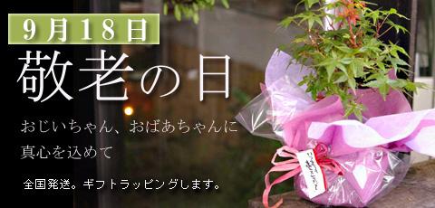 敬老の日の贈り物におすすめ苔玉や盆栽