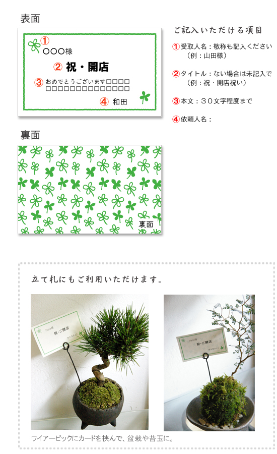 苔玉 盆栽 ギフトカード