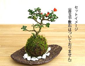 盆栽・苔玉受け皿