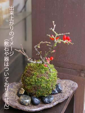 苔玉キット