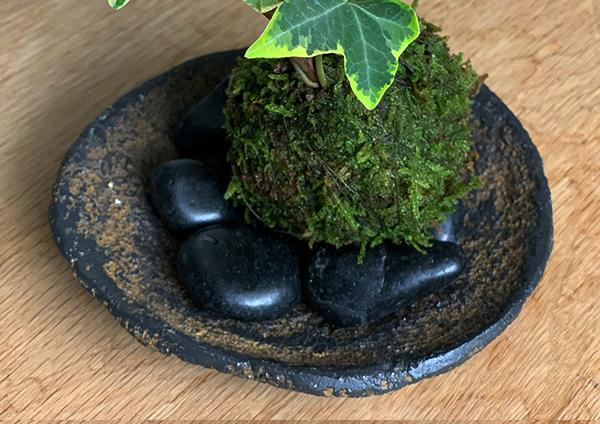 アイビーの苔玉