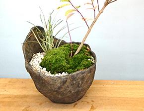 ムラサキシキブの盆栽
