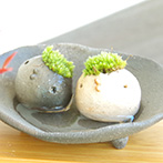 ヤブコウジの苔玉とモスモス