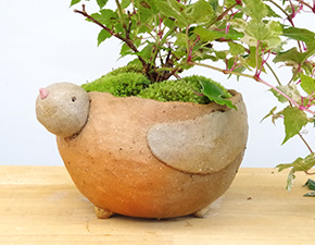 斑入りノブドウの盆栽