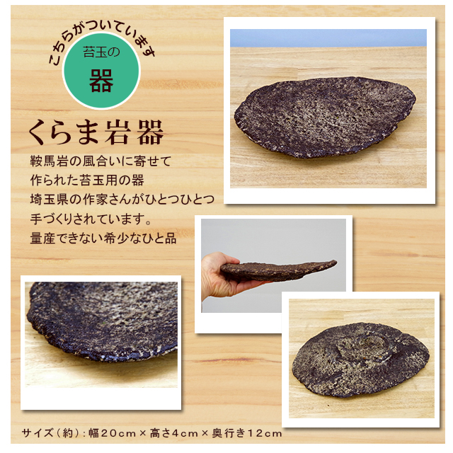 黒松の苔玉