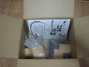 苔玉の梱包イメージ