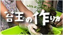 苔玉の作り方