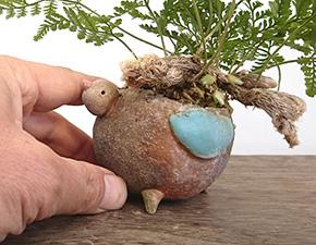 しのぶ(シノブ)の盆栽