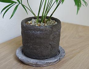 テーブルヤシの鉢植え